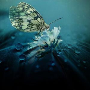 菜虫化蝶(なむしちょうとなる)