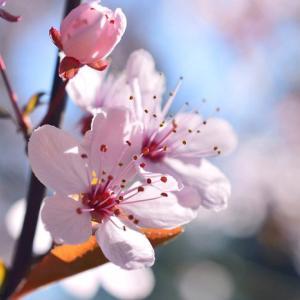 春彼岸入りですね。