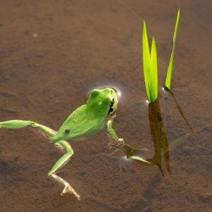 蛙始鳴(かわずはじめてなく)