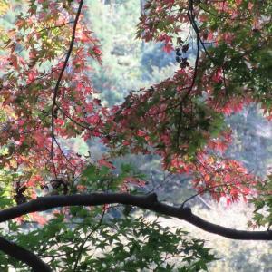 少し紅葉の高宕大滝トレイルラン 1624
