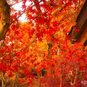 福岡の宝満宮竈門神社&太宰府天満宮に紅葉を見に行った