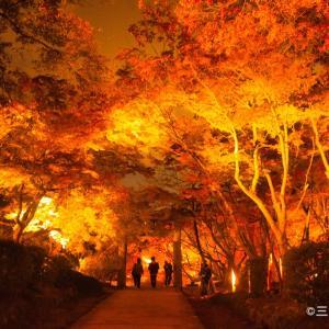 福岡の竈門(かまど)神社に紅葉を見に行ってきた
