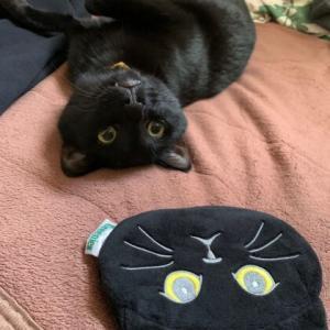 黒猫多めと活動報告など。