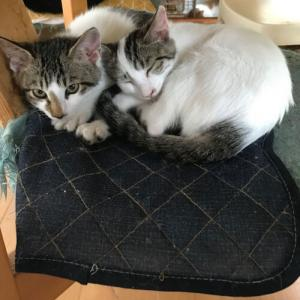 荒ぶるヒバリとマボロシの猫
