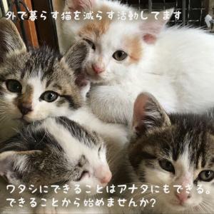 子猫劇場 外で暮らす猫編