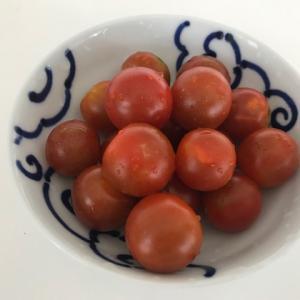 お手本通りに育てたプランターのミニトマトが大豊作です