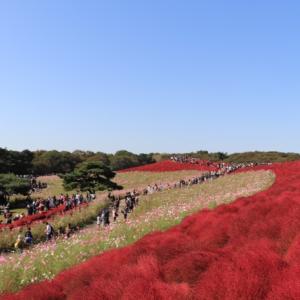 """茨城県が""""いばらき応援割""""を間もなく実施!関東でも観光支援が本格化してきました。"""