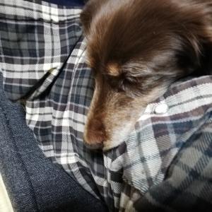 愛犬の温もりは幸せです✨