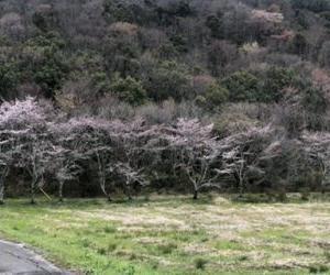 栃ヶ池湿地植物群落