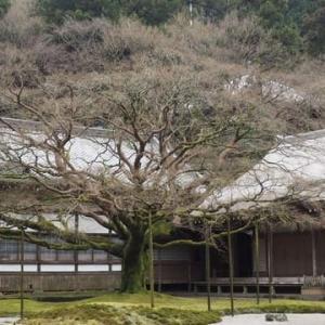 旧正月・雷山観音へ(雷山千如寺大悲王院)