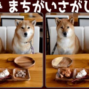 【間違い探し】写真の中に異なる部分が3か所あるので探す問題