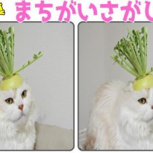 【間違い探し】2枚の写真から3か所の違いを見つける脳トレ!