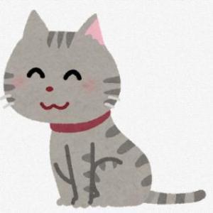 猫の尿路結石?のその後