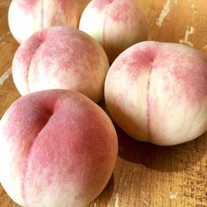 河内長野 小山田 中谷農園 桃を使った期間限定コラボスムージー