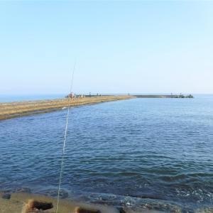 久しぶりの東港!まったりキス釣りのはずが・・。