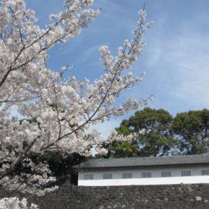 皇居乾通り・千鳥ヶ淵・武道館周辺の桜