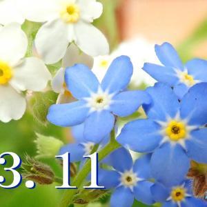 音路20. この日を忘れない ~ 花は咲く