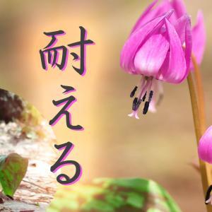 音路23. 変わらない【前編】カタクリの花のように