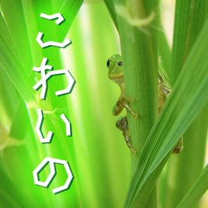 音路 / 番外編. イメージアップ大作戦 ~ 本能寺の信長のカエル
