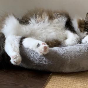 おニューのベッド