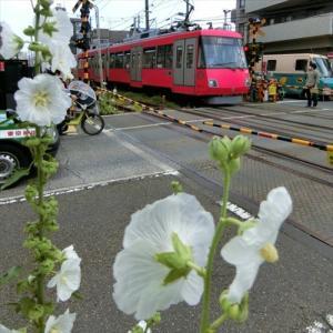 世田谷線に沿ってポタリング 1回目・三軒茶屋駅から西太子堂駅