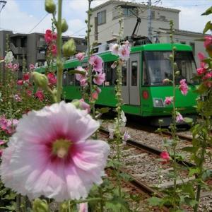 世田谷線に沿ってポタリング 5回目・下高井戸駅 最終回