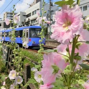世田谷線に沿ってポタリング 3回目・世田谷駅から上町駅、宮の坂駅