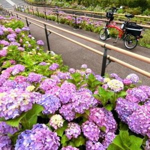 二子玉川の公園は6月の花がいっぱいです