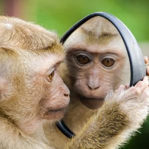 【急募】美容師「仕上がり・・・こんな感じっす!」鏡クイっ←これなんて返してる?