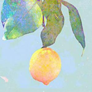 【超朗報】レモン汁を頭皮に塗るだけで髪が生えると発表される!!!【何度目だハゲ】