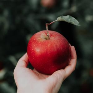 【超朗報】リンゴを食べると髪が生えると発表される!!!【何度目だハゲ】
