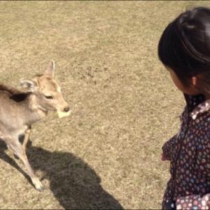 コロナで奈良の鹿に影響が?~息子と話した経済のはなし