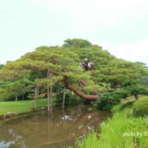 【金沢】兼六園の美しい庭園をぶらり散歩