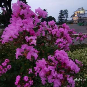 【金沢・観光】金沢城公園のライトアップ  石川門と石垣