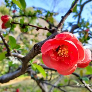 【 殿ヶ谷戸庭園 】山歩きの気分で、自然の地形を生かした庭園を散歩