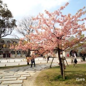 北九州の【 門司港 】はレトロな雰囲気の港町、桜も見られます。