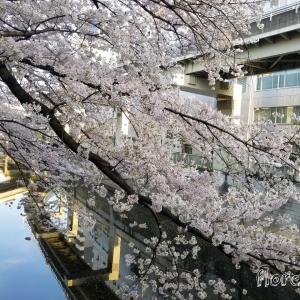 【江戸川橋へ 】椿山荘へ行くはずがお休みで・・・江戸川橋付近をウロウロ