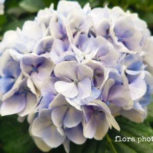 【お散歩花便り】東京芸術劇場お花の綺麗なスペース