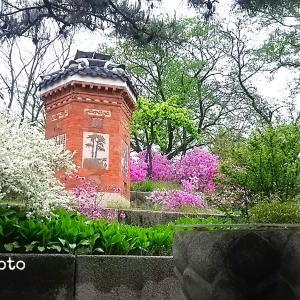 【韓国】景福宮をチラ見&明洞の夜景