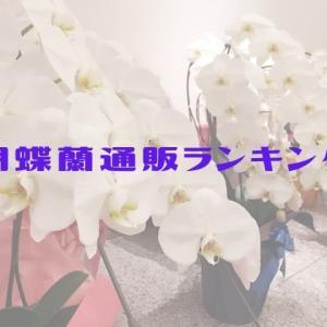 お祝い花に贈る胡蝶蘭胡は花が終わったらどうする?胡蝶蘭通販もチェック!
