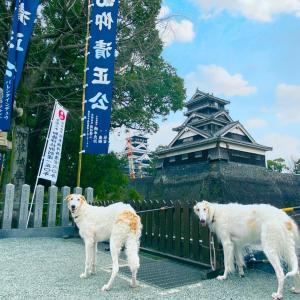 熊本県 熊本市  ★熊本城 ①      ボッチによるボッチの為のボッチ散歩