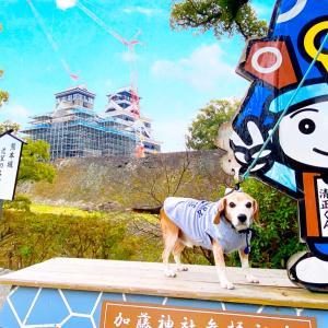 熊本県 熊本市  ★熊本城②      城彩苑でゴルチャイへおみやげがや
