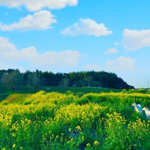 熊本県 荒尾市  ★秘密基地      人なんて少ない田舎だけど4月から自重期間に入るのだ