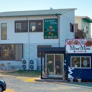 福岡県 筑後市  ★キャバリアハウス      子犬の初カフェ