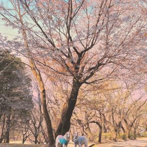 熊本県 合志町  ★弁天山      七福神の弁財天は梵天とカップルなんだよ