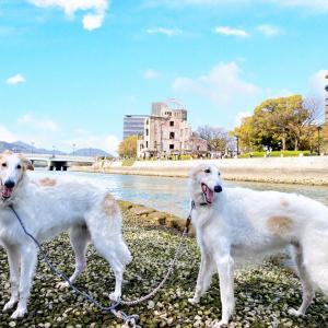 広島県 広島市  ★平和記念公園③      ☆大人になってからの修学旅行やり直しって感じ