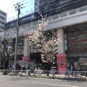 昨日の売上は26,350円 街中で桜の花をみかけるようになりました