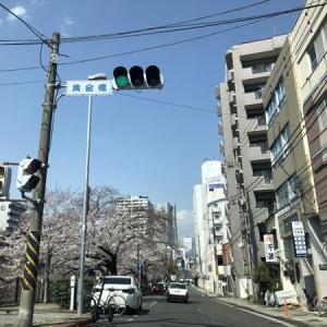 金曜日、隔日勤務、売上42,100円 桜が咲いて、陽気もいいせいか、人出が増えたような気がします