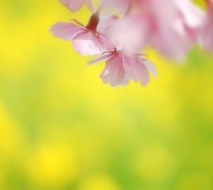 初島=春爛漫