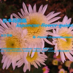 白いひまわり?!White sunflower? !!